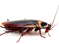 Roach Busters Pest Control